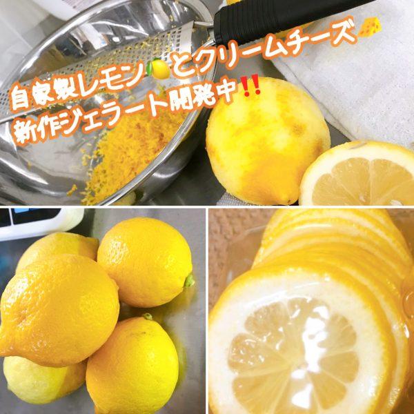 自家製レモンジェラート